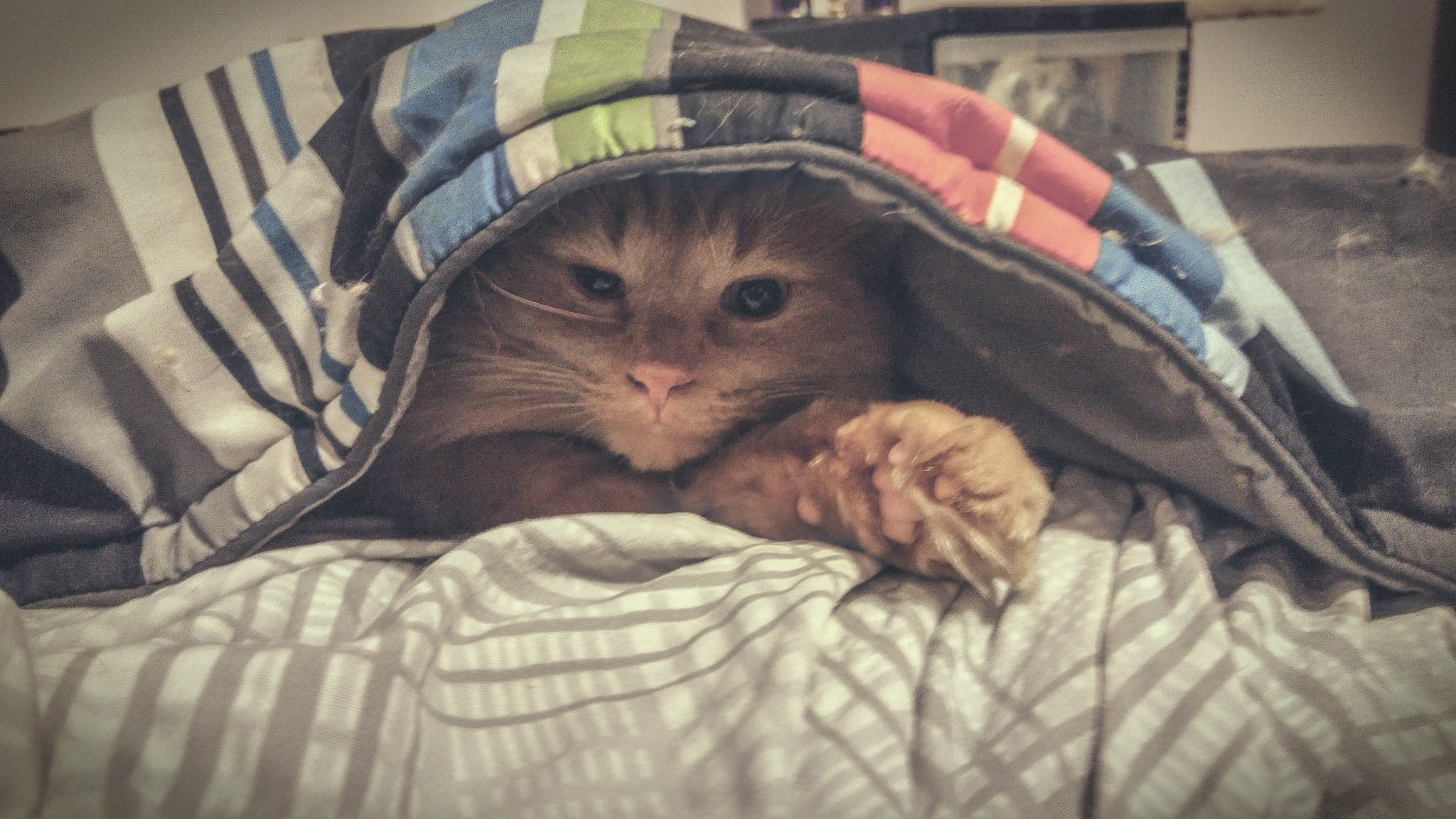 Garfield Under the Blankets