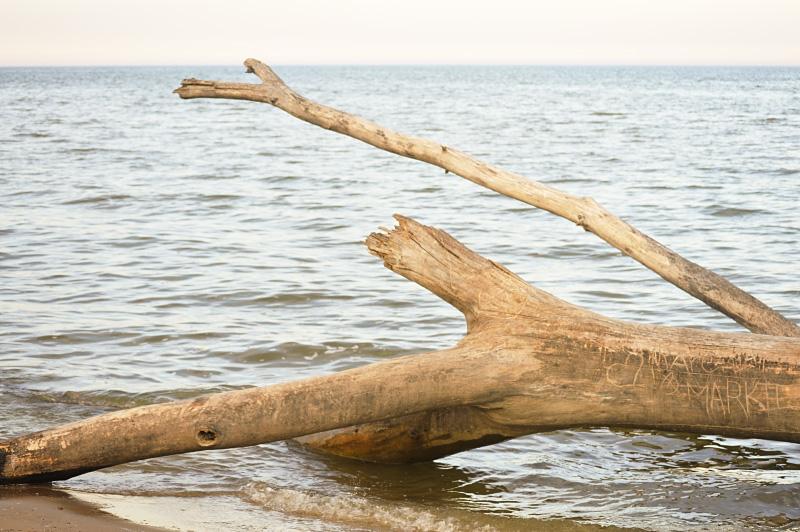 Bay City State Park Fallen Tree
