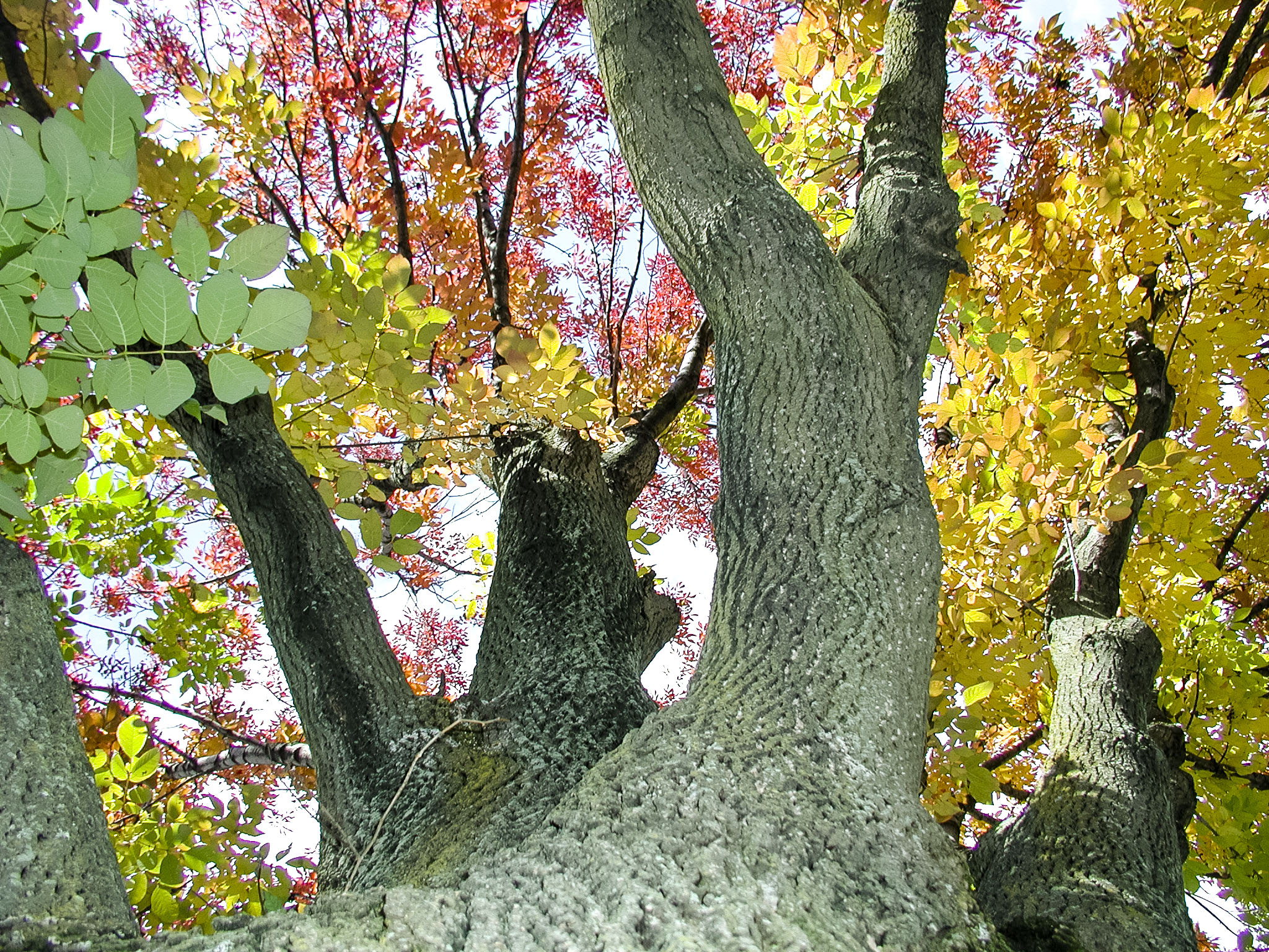 Fall in Pontiac, Mi