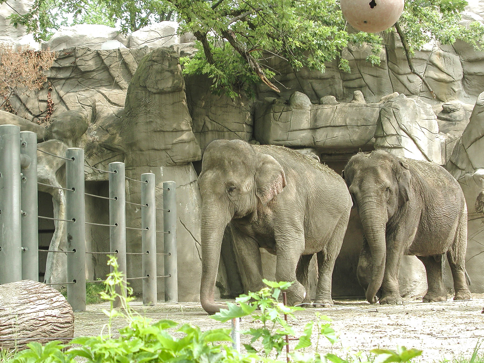 Elephants at Detroit Zoo