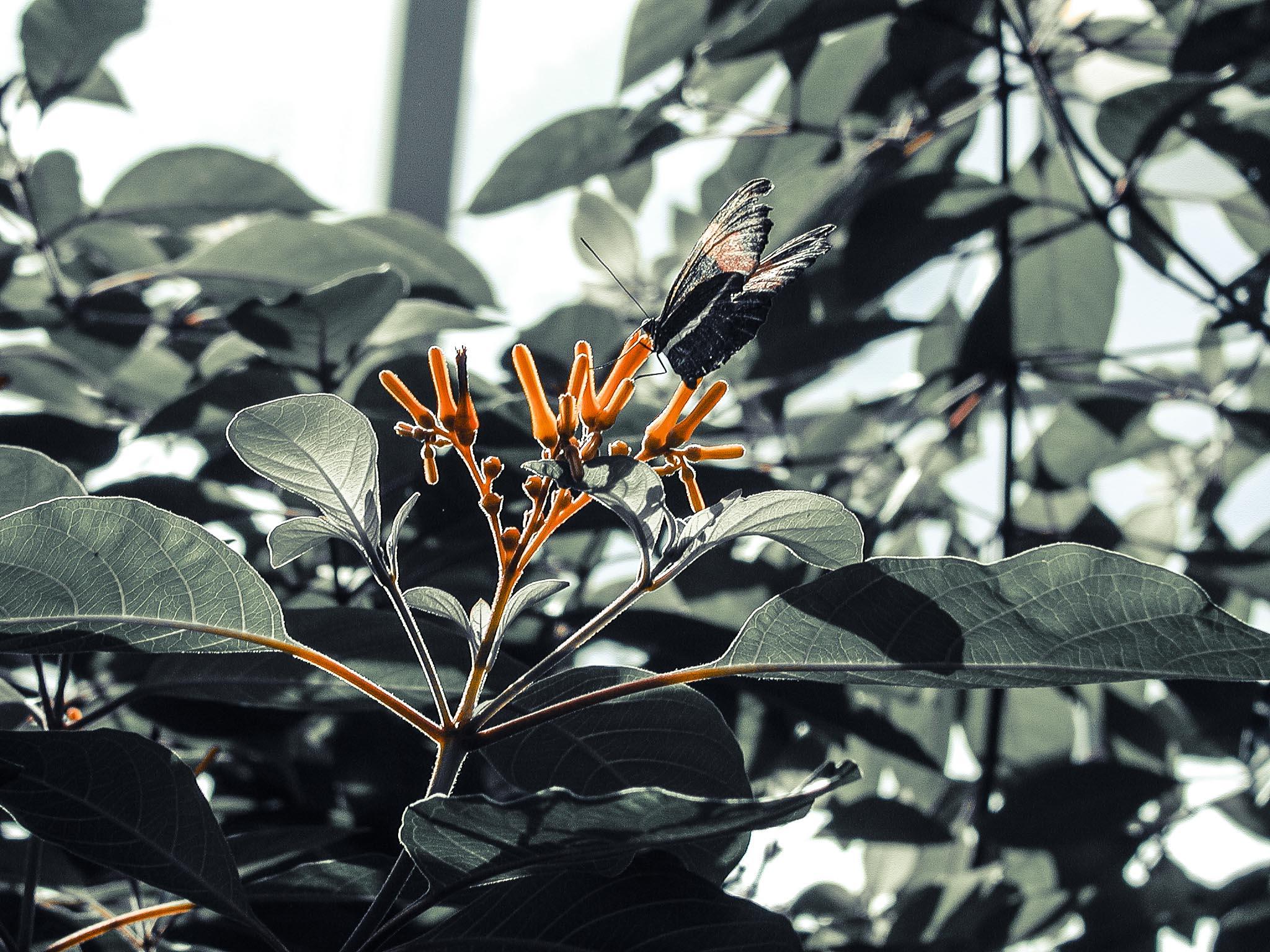 Buterfly, Detroit Zoo 2002