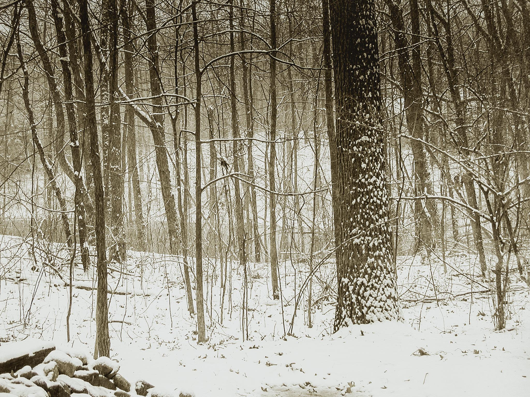 My woods on a cold winter day White Lake, MI